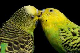 baciarsi-è-antistress-e-rafforza-il-sistema-immunitario