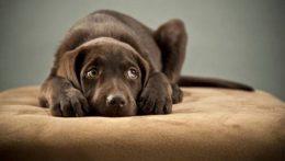 i-migliori-calmanti-per-cani-e-gatti-stressati